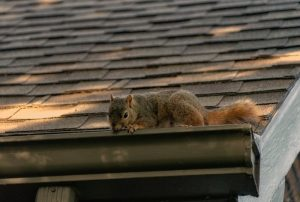 squirrel gutters