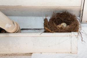 a bird's nest clogged in gutters